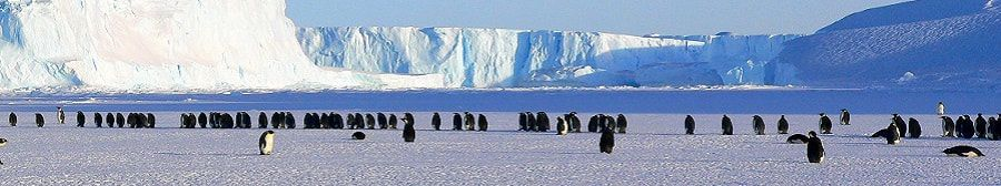 antarctic wide 5