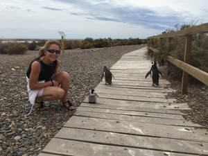 punta tombo penguins puerto madryn